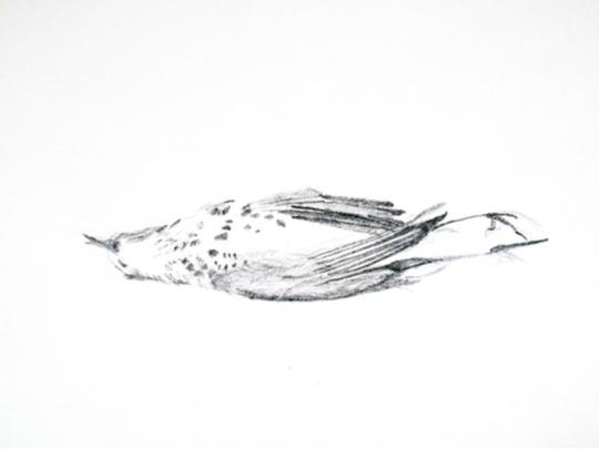 deadbird4